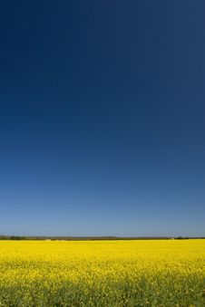 Free Canola Fields Stock Photos - 3549923