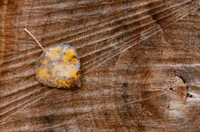 Free Autumn Leaf Royalty Free Stock Images - 35406809