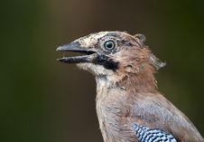 Funny Bird Portrait Royalty Free Stock Photography