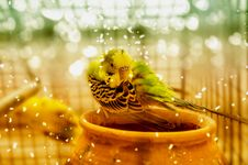 Cold Winter Parrot Bird Royalty Free Stock Photos