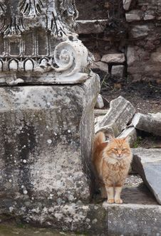 Cat In Ephesus Stock Photos