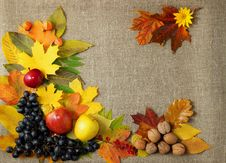 Free Grapes, Apples, Autumn Leaves On The Background Royalty Free Stock Photo - 35425365