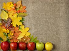 Free Apples On The Background Of Autumn Leaves Royalty Free Stock Images - 35425379
