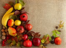 Free Autumn Fruits On Background Royalty Free Stock Photography - 35425417