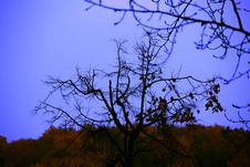 Autumn Twilight Royalty Free Stock Photos