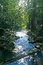 Free Stream Flowing In Lush Tropical Forest Stock Photo - 35427480