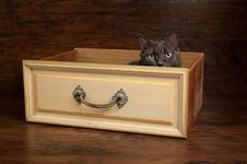 Gray Cat In A Vintage Yellow Drawer Stock Image