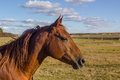 Free Horse Stock Images - 35443124