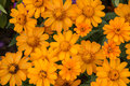Free Yellow Flower Royalty Free Stock Photography - 35444587