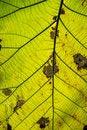 Free Closeup Leaves Stock Photos - 35444663