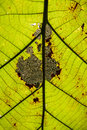Free Closeup Leaves Stock Photography - 35444682
