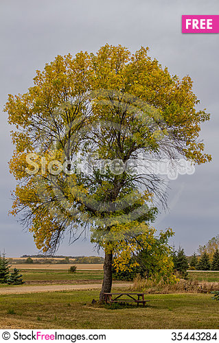 Free Fall Tree Stock Images - 35443284