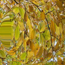 Free Autumn Leaves Stock Photo - 35440690