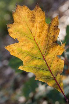 Free Autumn Leave Stock Image - 35441651