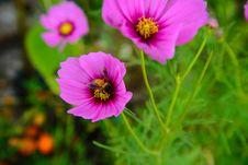 Free Purple Flower Stock Photos - 35444593