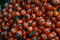 Free Palm Fruit Stock Image - 35444611