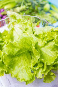 Free Fresh Lettuce Stock Photos - 35451213