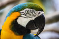 Free Macaw Stock Images - 35461244