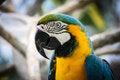 Free Macaw Stock Image - 35461251
