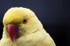 Free Yellow Parrot Stock Images - 35461144