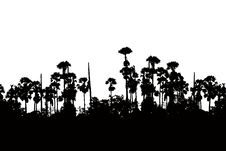 Free Silhouette Sugar Palm Royalty Free Stock Photography - 35469917