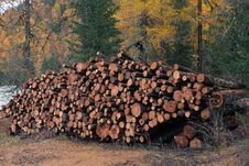 Free Larch Logs At Logging Stock Photos - 35471953