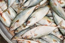 Fresh Sardine Fish At Market Stock Photos