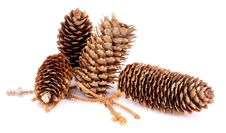 Free Fir Cones Stock Images - 35473094