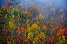 Free Larch Trees In Autumn Stock Images - 35477104