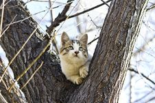 Free Small Kitten Royalty Free Stock Photo - 35495635