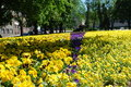 Free Beatiful Flowers In Estonia Royalty Free Stock Photo - 3551815