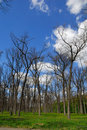 Free Leafless Forest Stock Photo - 3551850