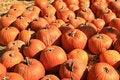Free Orange Fall Holiday Pumpkins Royalty Free Stock Photo - 3552435