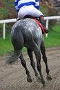 Free Horse-racing Royalty Free Stock Photo - 3553475