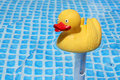Free Yellow Rubber Duck Stock Image - 3553661