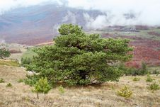 Free Tree Royalty Free Stock Photos - 3550508