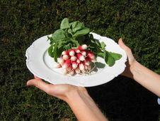 Free A Bunch Of Radishes Royalty Free Stock Photo - 3550605