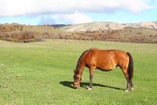 Free A Horse Stock Photos - 3550853
