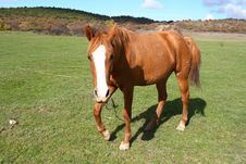 Free A Horse Stock Images - 3551114