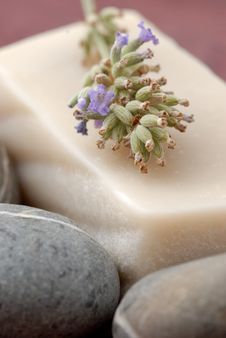 Free Lavender Royalty Free Stock Image - 3551636