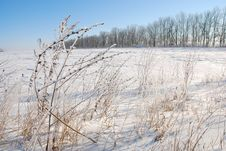 Free Winter Field Stock Photography - 3552012