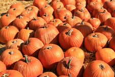 Free Orange Fall Holiday Pumpkins Royalty Free Stock Photo - 3552435