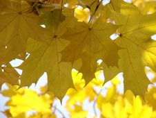 Free Autumnal Leaves 3 Stock Image - 3553521