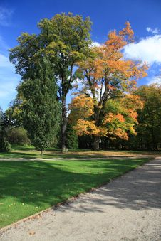 Free Autumn Trees Royalty Free Stock Image - 3553646