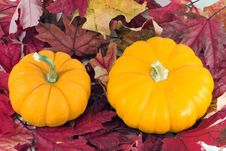 Free Pumpkins On Red Leaves Stock Images - 3553674