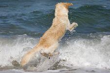 Free Dog Jumping Stock Image - 3555251