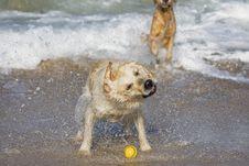 Free Dog Shaking Head Stock Photo - 3555270