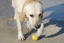 Free Dog Retrieving A Ball Stock Images - 3555324
