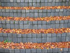 Free Leaf And Stair Pattern Stock Photography - 3555402