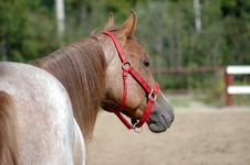 Beauty Horse In Chocolate Stock Images